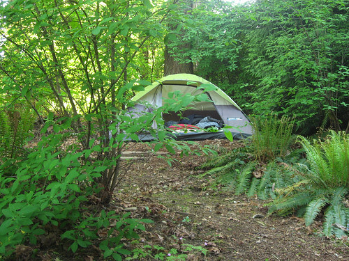 camping in backyard