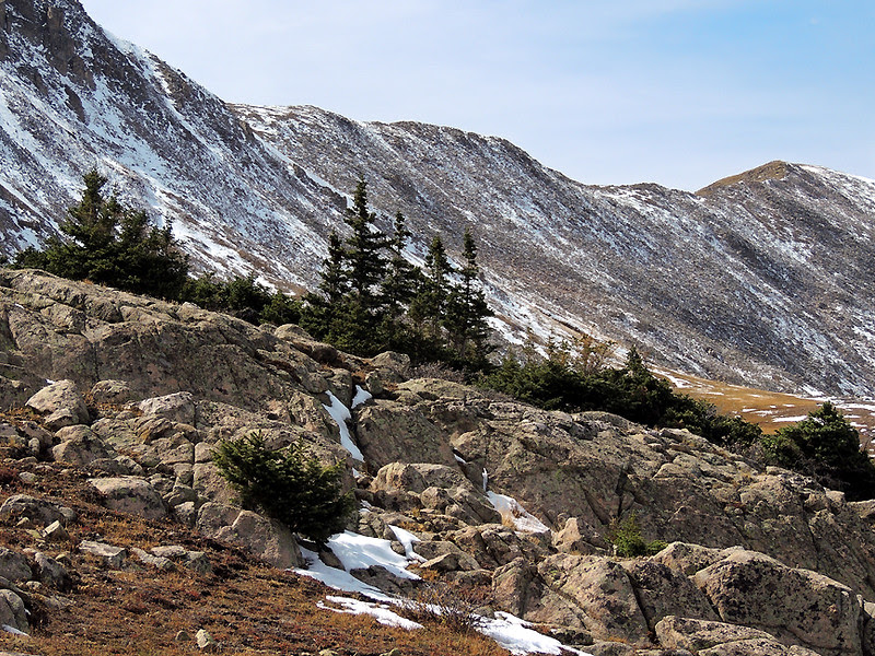 Krummholz, Alpine Pass, Sawatch Range, Colorao