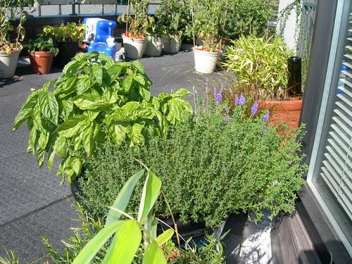 2009-07-19 Mixed Herb Pot