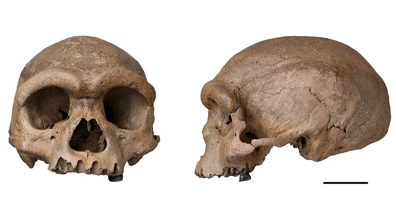 """In an undated image from Xijun Ni, the cranium nicknamed """"Dragon Man."""" Scientists on Friday announced that the massive fossilized skull that is at least 140,000 years old is a new species of ancient human. (Xijun Ni via The New York Times) -- FOR EDITORIAL USE ONLY WITH NYT STORY DRAGON MAN FOSSIL BY CARL ZIMMER FOR JUNE 25, 2021. ALL OTHER USE PROHIBITED. --"""