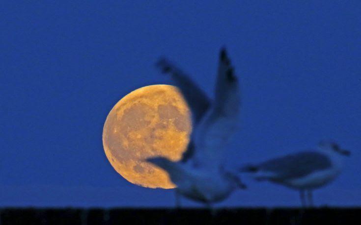 The supermoon raises behind seagulls on the beach in Evanston, Illinois