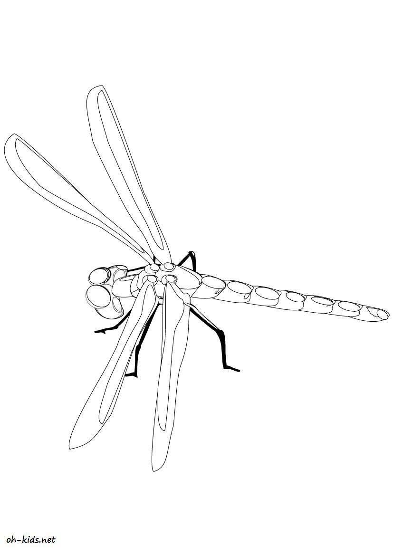 une jolie image de libellule  colorier et imprimer Pour enfants Dessin 451
