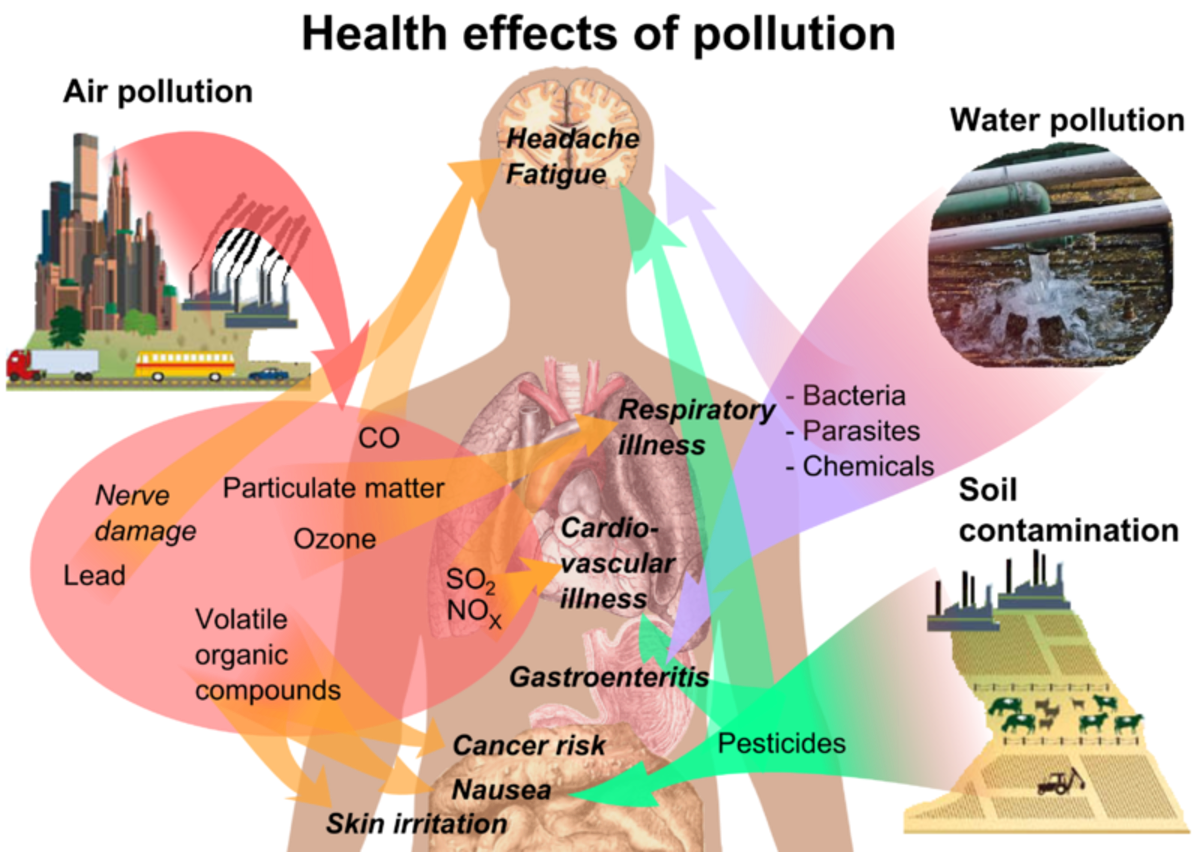 An overview of the main health effects of the most common forms of pollution.