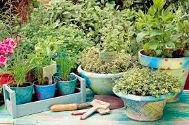6-ωφέλιμα-και-ευεργετικά-βότανα