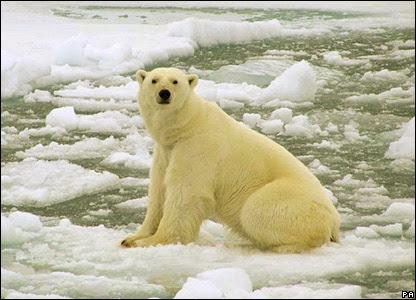http://newsimg.bbc.co.uk/media/images/42962000/jpg/_42962385_polar_pa_203.jpg