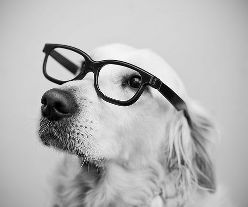 Tumblr Animales Hipster Imagui