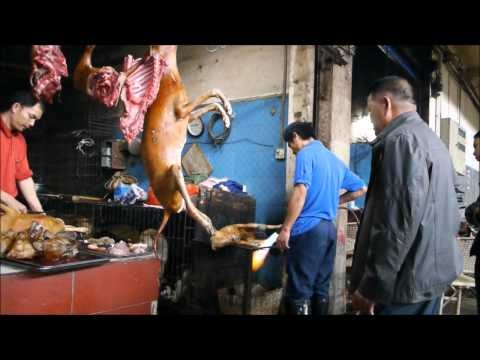 people eating dog meat in china,