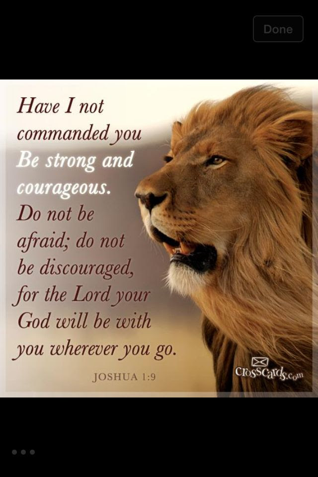 Heart Of A Lion Quotes