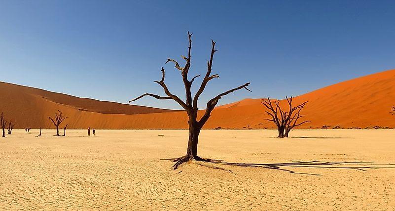 """Résultat de recherche d'images pour """"Désert du Kalahari"""""""