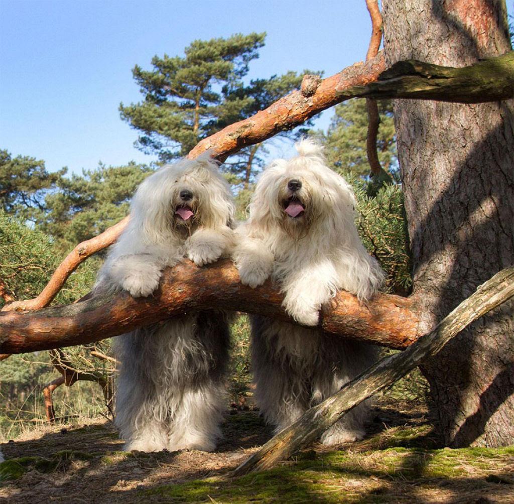 Estas fotogênicas irmãs bobtail fazem pose até para relâmpagos 20