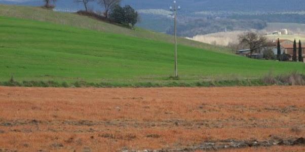 erba rossa