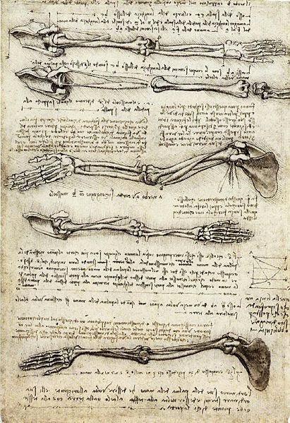 Leonardo - Esboços anatômicos