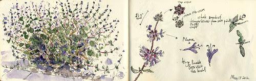 May 2012: Purple Bush by apple-pine