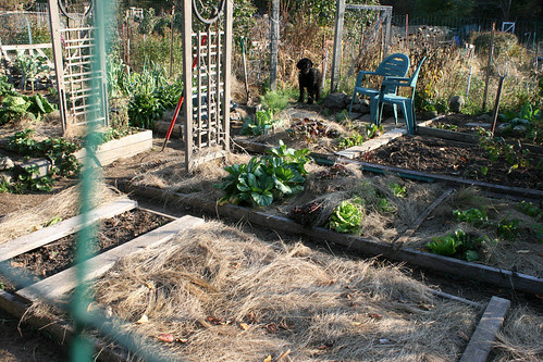 october vegetable garden plot 015