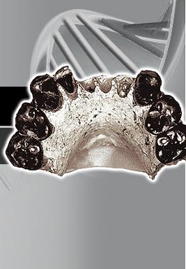 Resultado de imagen de Australopithecus bahrelghazali