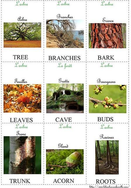 petites cartes d'anglais L'arbre AAAAAAAAAAAAAAAAAAAAAA