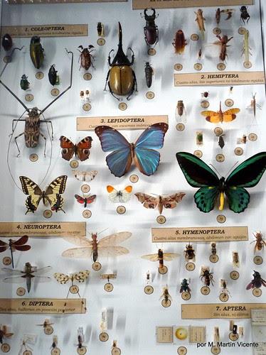 En el Museo de Ciencias Naturles