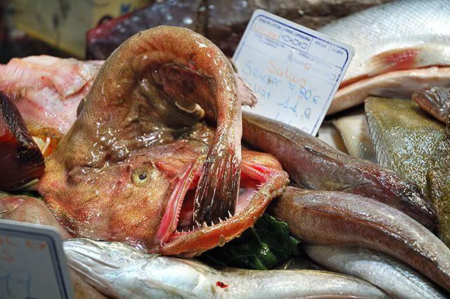 Monkfish -  [enlarge]