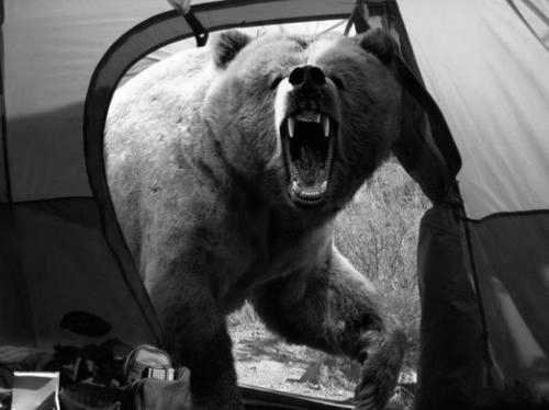 yourenotaloneinthedark:  Michio Hoshino, a Japanese photographer known for his wildlife photography, was mauled to death by a brown bear on the Kamchatka Peninsula in eastern Russia. This was the last photo he took.