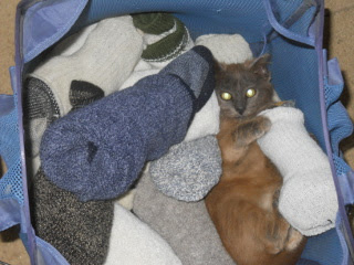 Mimi in the Laundry