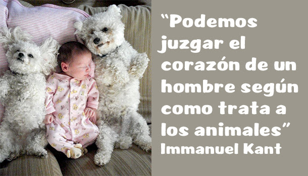 Frases Celebres Sobre Perros Mimomimascota
