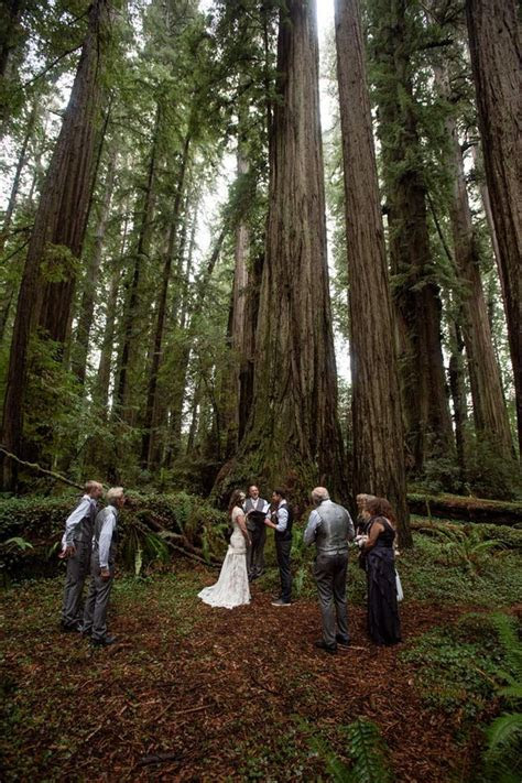 Best 25  Redwood forest wedding ideas on Pinterest