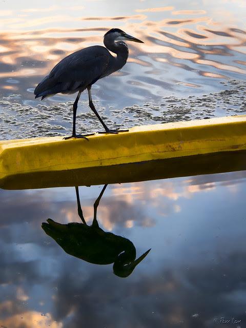 Malibu lagoon fishing bird
