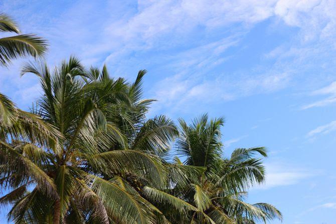 photo 6-combi billabong womens_combishort-palmiers-srilanka-mirissa_zpszzwrorrs.jpg