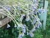 wildflowers from maroulides horta hania crete