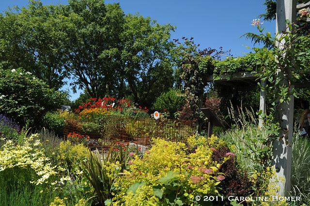 Waterwise garden