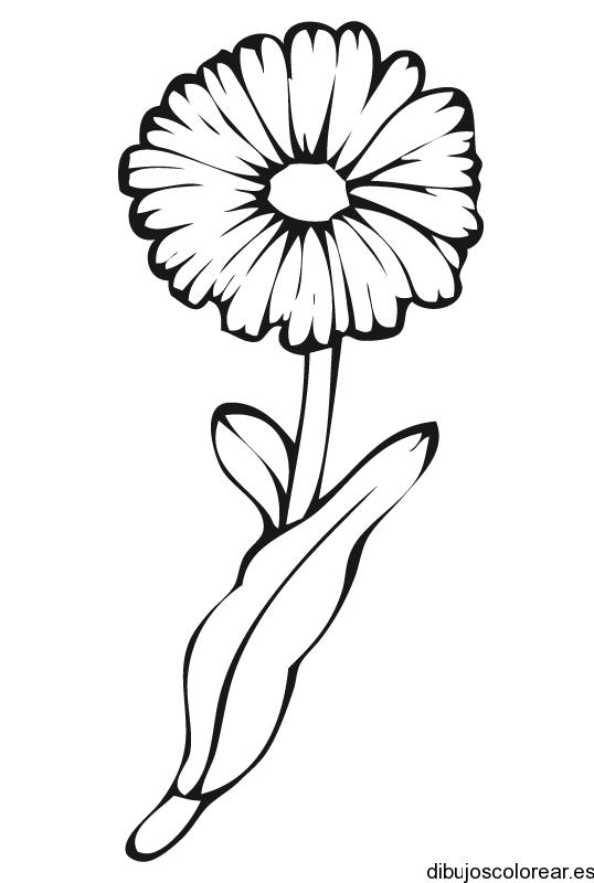 Girasol Dibujo