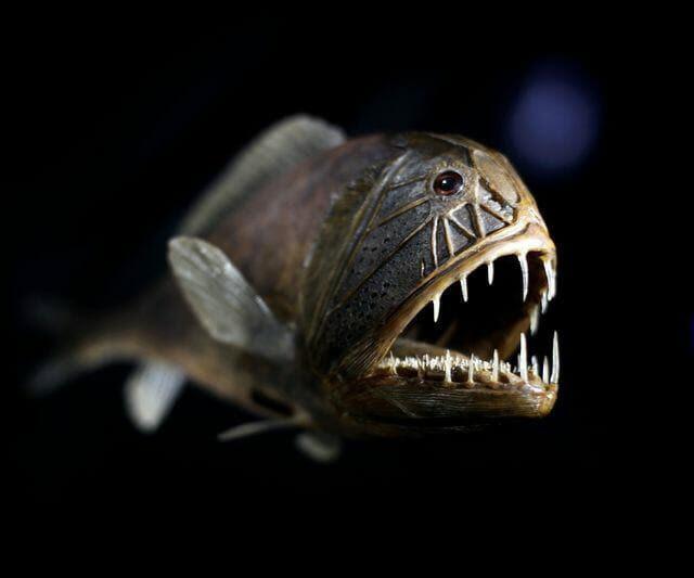 criaturas-mais-feias-e-bizarras_peixe-ogro_1