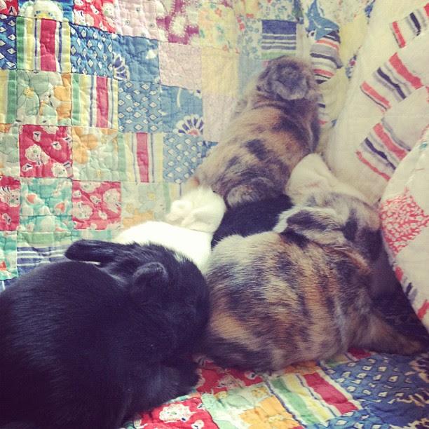 pile o'bunnies