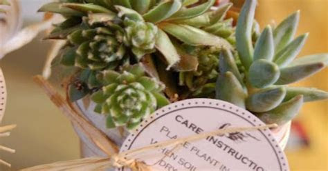 Succulent favors with care instructions tag :)   party