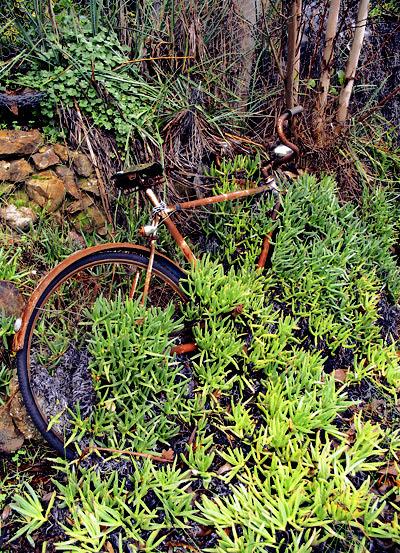 2008.08.01_bicycle in the rain_FLAT_400w