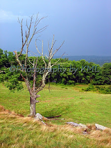 the tree and field after a summer thunderstorm
