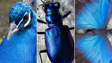 animals hacked  rainbow   stumped  blue