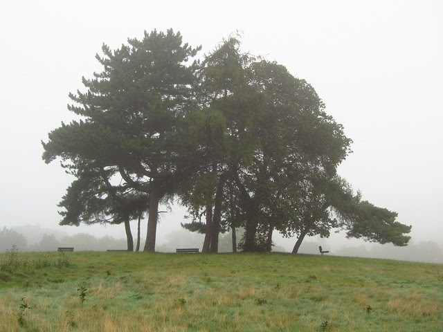 Trees on the Little Tumulus Field