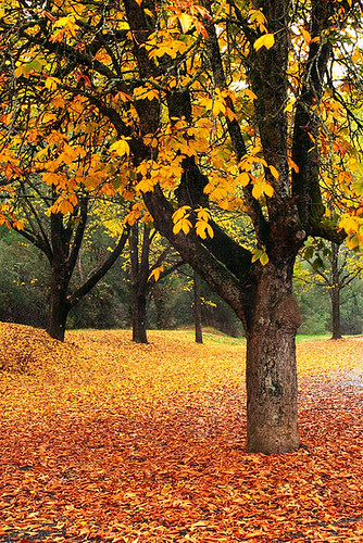 Bright, Victoria, Australia, autumn IMG_9723_Bright by Darren Stones Visual Communications