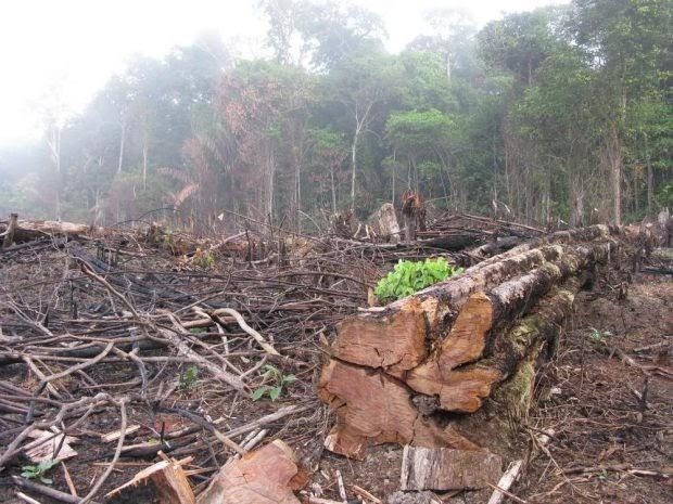 PREDICEN EL COLAPSO DE LA SELVA TROPICAL DEL AMAZONAS PARA EL AÑO 2064