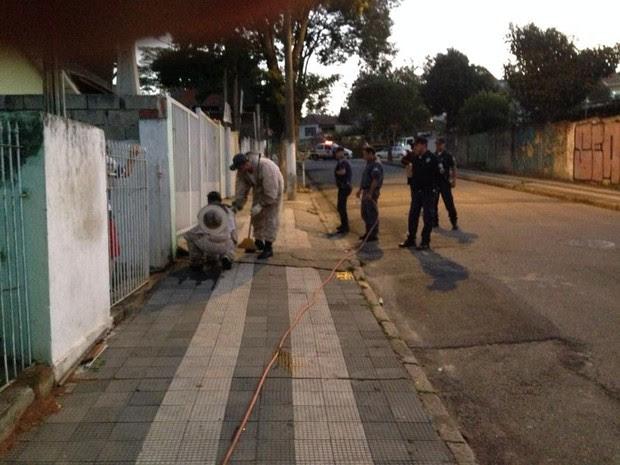 Ação contra abelhas em Mairinque (SP) (Foto: Divulgação/Bombeiro Municipal de Mairinque)