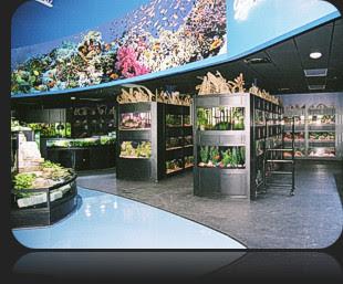 93 Foto Design Of Aquarium Shop HD Terbaru Unduh Gratis