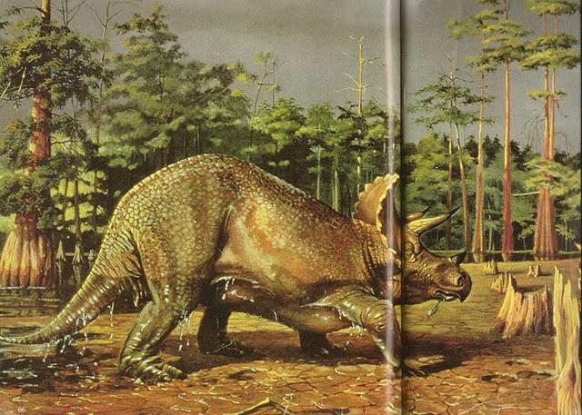 Eleanor M. Kish Triceratops