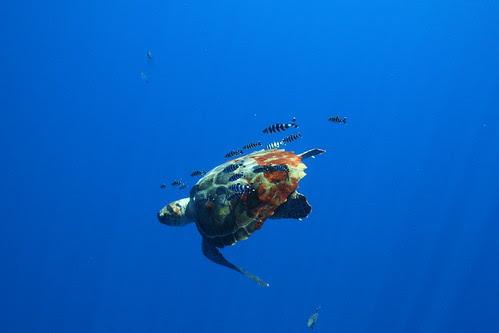 Tartaruga Foto Hernrique Botelho