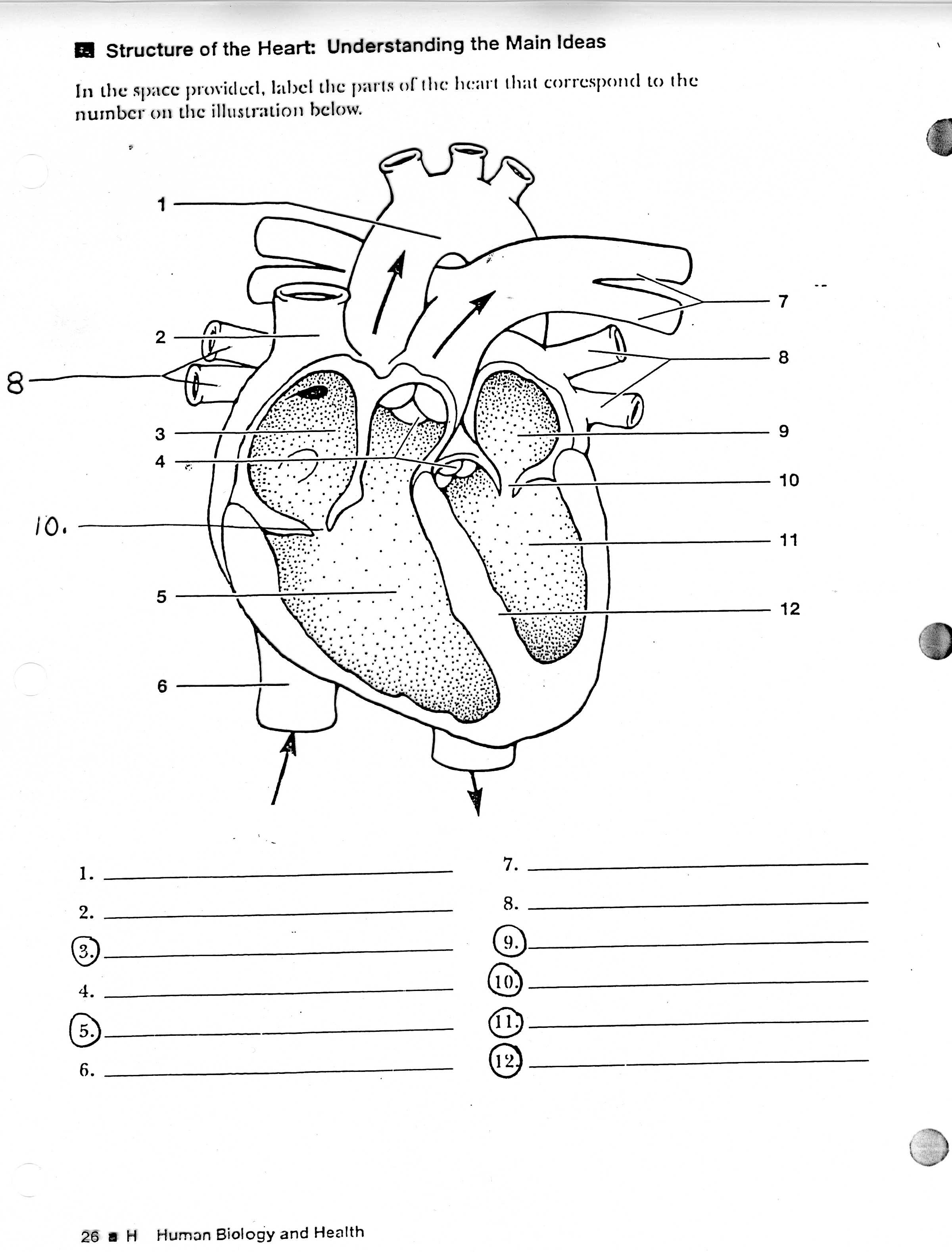 Blank diagram of the heart calendar june blank heart diagram free download clip art free clip art on ccuart Image collections