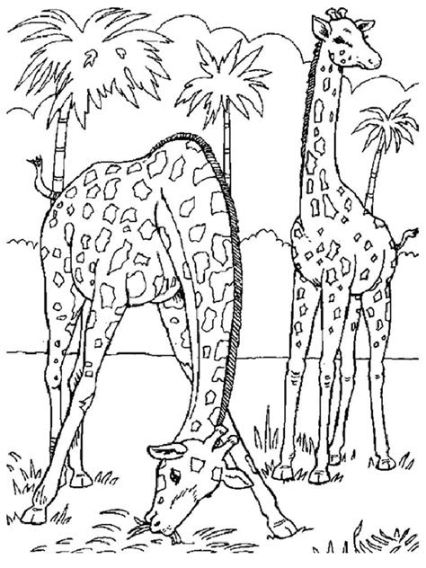 wild animal coloring pages  coloring pages  kids