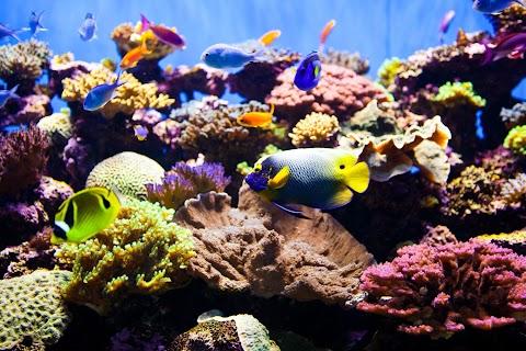 What Temperature Should My Saltwater Aquarium Be