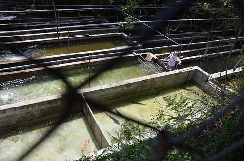 Psilo Dentro Forellenzucht, dem Einstieg zum Kalidonia Wasserfall