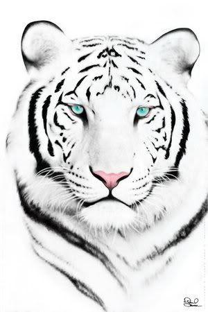 White Tiger Head Tattoo Design