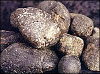 Ambergris pebbles (Pic: www.ambergris.co.nz)